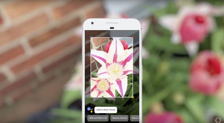 Google lens flower image identification example